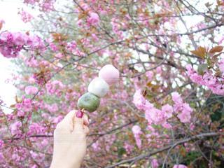 花を持っている人の写真・画像素材[1109022]