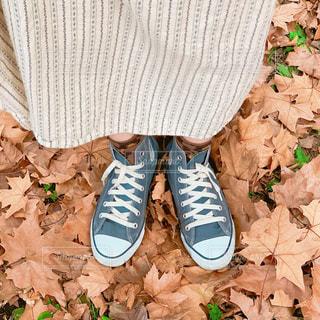 紅葉とスニーカーの秋の足元の写真・画像素材[1649122]