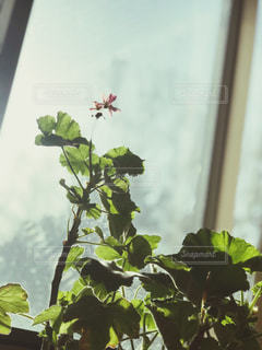 木の枝に咲く花の花瓶の写真・画像素材[2121915]