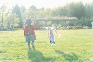 鯉のぼりと走る少女の写真・画像素材[2198259]