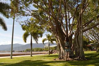 木の隣のヤシの木の群しの写真・画像素材[2359998]