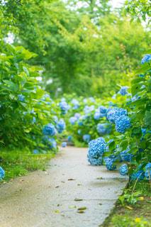 青と緑の茂みのグループの写真・画像素材[2418245]