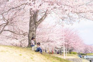 春の訪れの写真・画像素材[2715342]