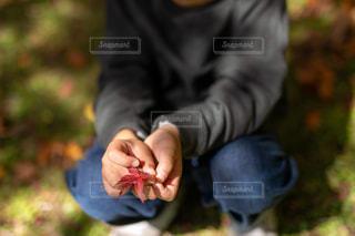 落葉の写真・画像素材[2845468]