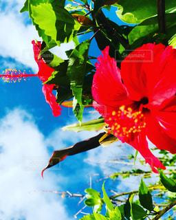 色とりどりの花のグループの写真・画像素材[2122789]