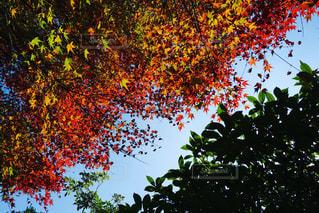 木のクローズアップの写真・画像素材[2123588]