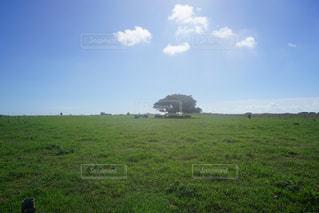 背景に木がある大きな緑の野原の写真・画像素材[2126857]