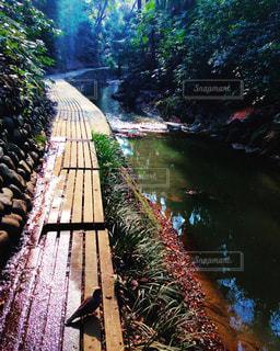 水面を背景にした庭の写真・画像素材[2133329]