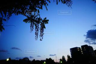 日暮れ時の藤の写真・画像素材[2123723]