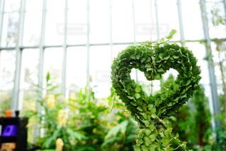 ハート型の植物リースの写真・画像素材[2123725]