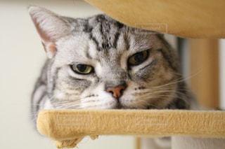 猫の接写の写真・画像素材[2125665]