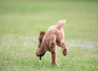 走る後ろ姿のお尻が可愛いの写真・画像素材[4664164]