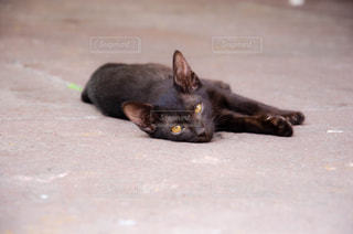 地面に横たわっている猫の写真・画像素材[2123865]