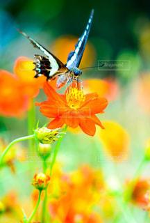 花のクローズアップの写真・画像素材[2442119]