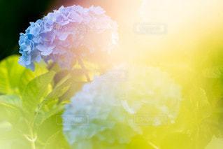 花のクローズアップの写真・画像素材[2323101]