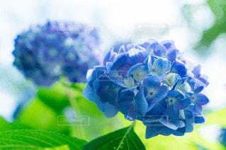 花のクローズアップの写真・画像素材[2323106]
