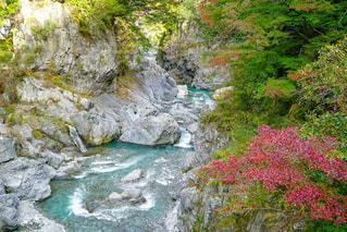奥多摩鳩ノ巣渓谷の写真・画像素材[2386350]