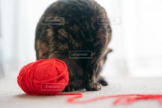 窓の前に座っている猫の写真・画像素材[2888475]