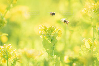 花のクローズアップの写真・画像素材[3004134]