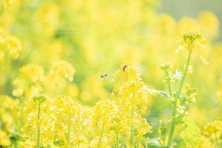 花のクローズアップの写真・画像素材[3004131]