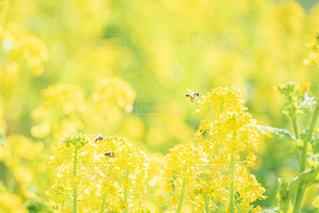 花のクローズアップの写真・画像素材[3004136]