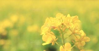 花のクローズアップの写真・画像素材[4225190]