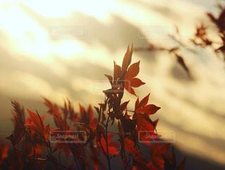 花のクローズアップの写真・画像素材[2127485]