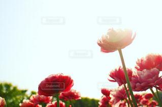 花のクローズアップの写真・画像素材[2127557]
