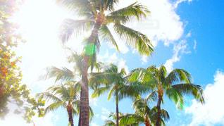 ハワイの空の写真・画像素材[2128920]
