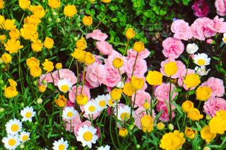 春の花壇の写真・画像素材[2131834]