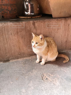 猫の写真・画像素材[2133692]