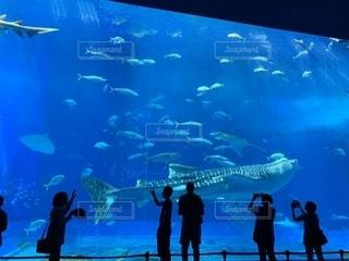 美ら海水族館の写真・画像素材[2125440]