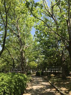 散歩 公園にての写真・画像素材[2149716]