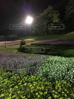 緑豊かな野原に立っている人の写真・画像素材[2494247]