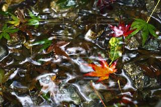 水たまりの紅葉の写真・画像素材[2241966]