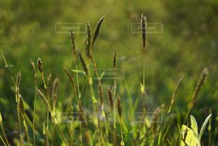 植物の接写の写真・画像素材[2125909]