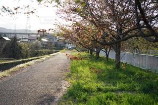 草と木のある小道の写真・画像素材[2125910]