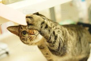 猫と遊んでるとこの写真・画像素材[2485332]