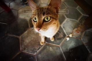 猫の写真・画像素材[14305]