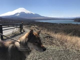 背景に山がある犬の写真・画像素材[2126803]