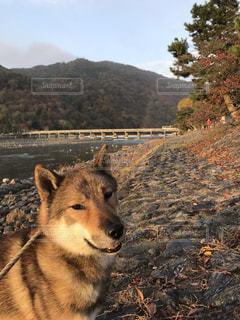 渡月橋近くを散歩の写真・画像素材[2128130]