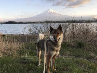 富士山をバックに…の写真・画像素材[2128195]