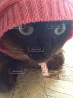 帽子をかぶった猫の写真・画像素材[2126973]