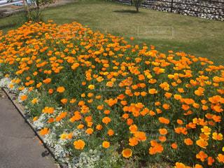 花のクローズアップの写真・画像素材[2127976]