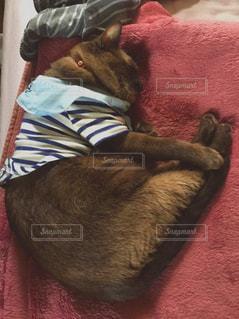 赤い毛布と猫の写真・画像素材[2127984]