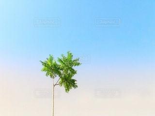 晴れた日の夏空イメージの写真・画像素材[2138310]