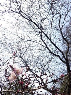 咲いてみますかの写真・画像素材[2127514]