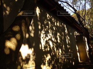 木漏れ日の写真・画像素材[2128866]