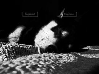 寝顔の写真・画像素材[2170404]