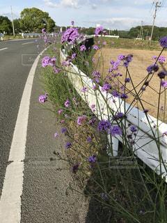 道端の花の写真・画像素材[2129621]
